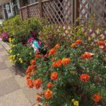ぬくもりの郷の花壇
